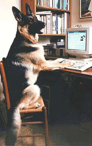 """I've been working all night to post these numbers. What do you mean some dogs have no votes?"""